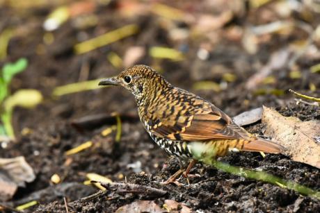 Birds Tour South India.Com