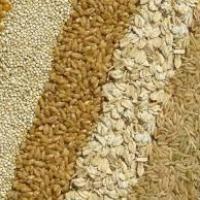 Grains at Shimla Hills Offerings Pvt. Ltd. in Shimla