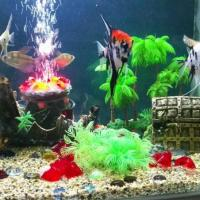 Aquarium Accessories at Tettra Aquarium in Coimbatore