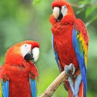 Macaws at Preethi Farms in Coimbatore