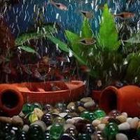Aquarium Accessories at Archana Petworld and Aquarium in Coimbatore