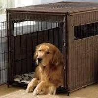 Dog Cages and Carriers at Classic Pet Store in Chennai