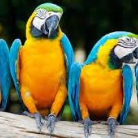 Macaws at GP Pets in Pollachi