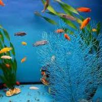 Aquarium Fishes at Aqua Pro in Chennai