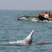 Dolphin Watching Boat Tour, Goa at Goa Water Sports Activities and Tour Packages in Sonar vaddo, Verla-Canca, Parra